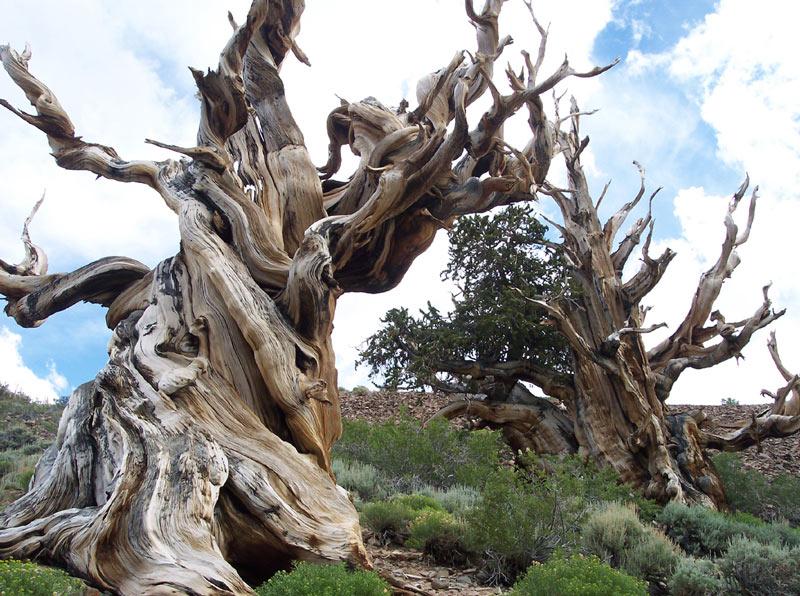 Prometheus tree image