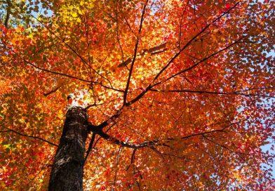 save trees image